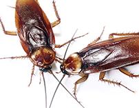 Roaches!