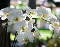 CRISPY FLOWERS